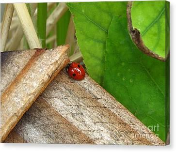 Little Lazy Ladybug Canvas Print