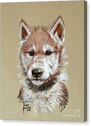 Little Lobo Canvas Print