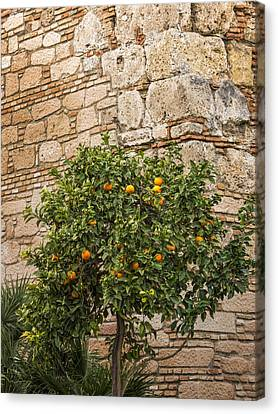 Little Orangetree Canvas Print