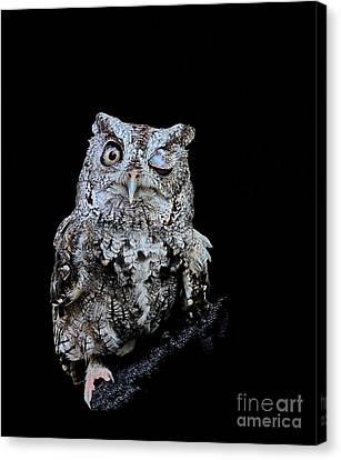 Little Owl Winks Eye In Darkness Canvas Print