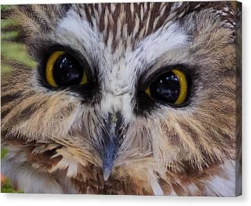 Saw Canvas Print - Little Owls by Everet Regal