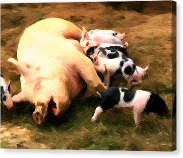 Little Piggies Canvas Print by Michael Pickett