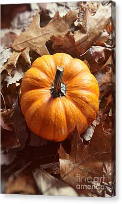Canvas Print featuring the photograph Little Pumpkin In A Bunch Of Leaves by Sandra Cunningham