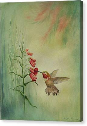 Little Rufous Canvas Print by Gina Gahagan