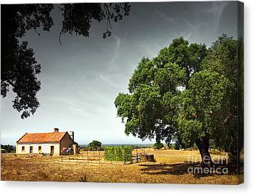 Little Rural House Canvas Print by Carlos Caetano