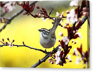 Canvas Print featuring the photograph Little Sparrow by Trina  Ansel
