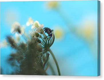 Little Spider Canvas Print by Rachelle Johnston