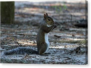 Little Squirrel Canvas Print by Cynthia Guinn