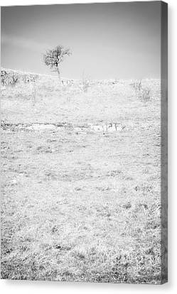 Little Tree On The Hill - Black And White Canvas Print by Natalie Kinnear