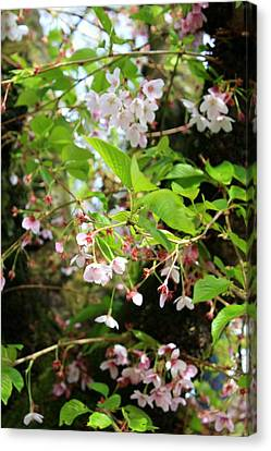 Little White Flowers Canvas Print by Cathie Tyler