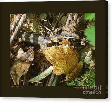 Little Yellow Frog Canvas Print