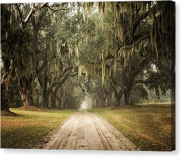 Live Oak Allee' On A Foggy Morn Canvas Print by Sandra Anderson