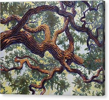 Live Oak Canvas Print by Andrew Danielsen