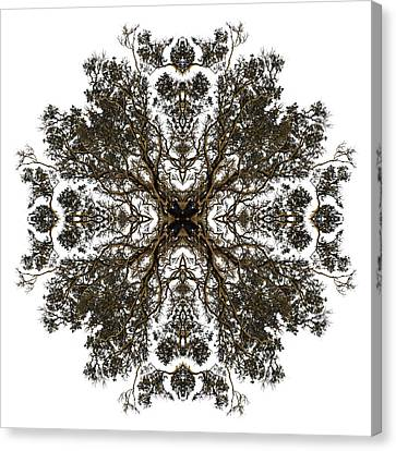 Live Oak Lace Canvas Print by Debra and Dave Vanderlaan