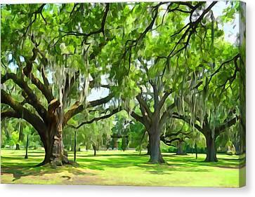 Live Oaks - Audubon Park New Orleeans Canvas Print by Dana Sohr