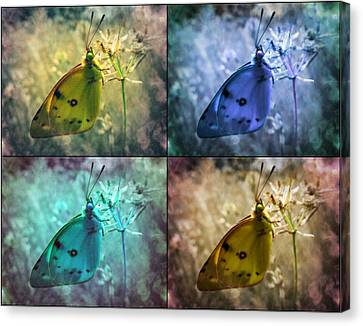 Lives Of A Butterfly Canvas Print by Marianna Mills