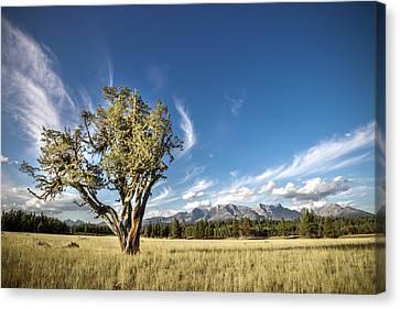 Livingston Range // Glacier National Park Canvas Print by Nicholas Parker