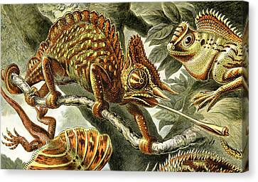Lizard Detail I Canvas Print by Unknown