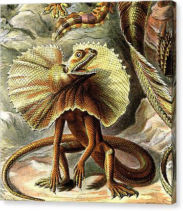 Lizard Detail IIi Canvas Print by Unknown