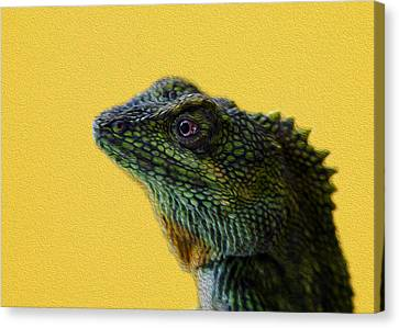 Lizard Canvas Print by Karen Walzer