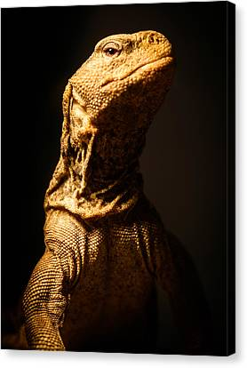 Lizard King Canvas Print by Marco Oliveira