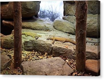 Lizard - National Aquarium In Baltimore Md - 12124 Canvas Print