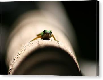 Lizard On A Log Canvas Print