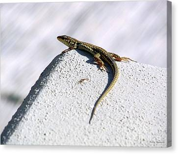 Lizard Canvas Print by Ramona Matei