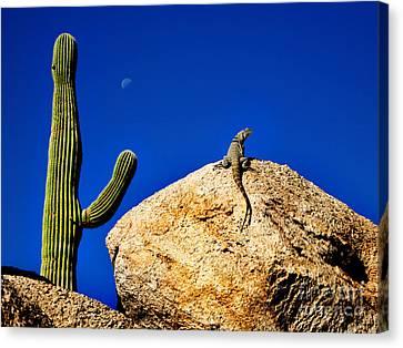 Lizard Sunning On Rock With Saguaro Canvas Print by Lane Erickson