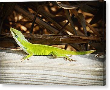 Lizard Canvas Print