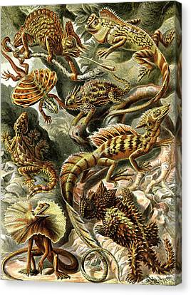 Lizards Lizards And More Lizards Canvas Print by Unknown