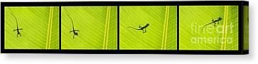 Lizards Canvas Print by Tim Gainey