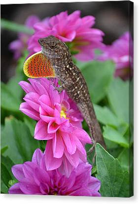 Lizzard Canvas Print