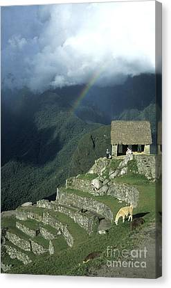 Llama And Rainbow At Machu Picchu Canvas Print by James Brunker