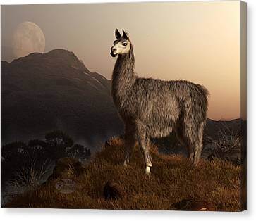Llama Dawn Canvas Print by Daniel Eskridge