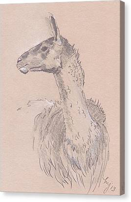 Llama Drawing Canvas Print