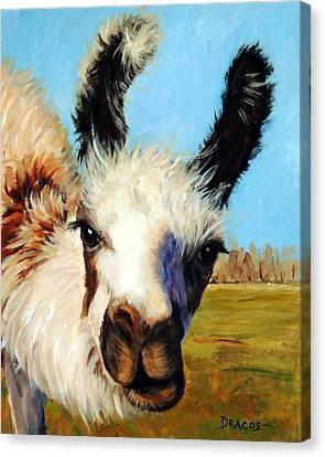 Llama Canvas Print - Llama In Afternoon Sunlight by Dottie Dracos