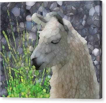 Llama Canvas Print - Llama by Jack Zulli