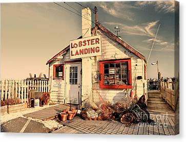 Lobster Landing Clinton Connecticut Canvas Print by Sabine Jacobs