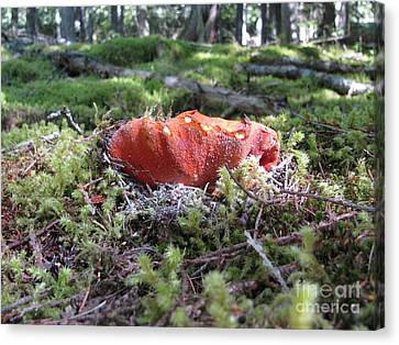 Lobster Mushroom Canvas Print by Leone Lund
