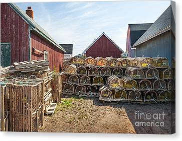 Lobster Traps In North Rustico Canvas Print by Elena Elisseeva