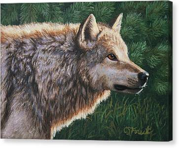 Wild Dogs Canvas Print - Grey Wolf - Locked by Crista Forest