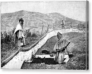Locust Pest Control, Algeria, 1889 Canvas Print by Science Photo Library