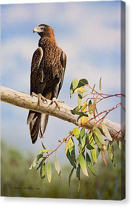 Lofty Visions - Wedge-tailed Eagle Canvas Print by Frances McMahon