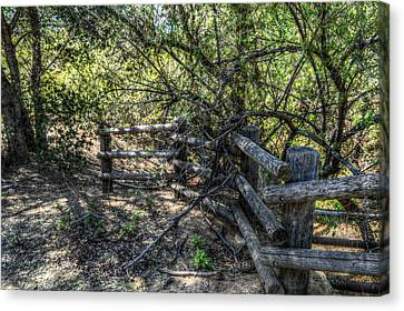 Log Fence Canvas Print by Cindy Nunn