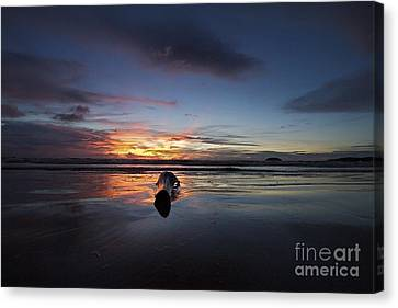 Canvas Print featuring the photograph Logged Out  by Gary Bridger