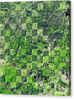 Logging Pattern Canvas Print