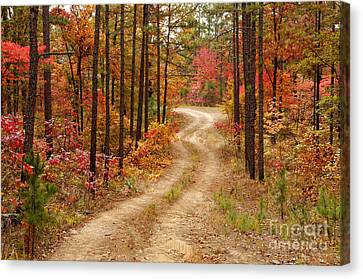 Logging Road In The Ouachita National Forest - Beaver's Bend State Park - Poteau - Oklahoma Arkansas Canvas Print by Silvio Ligutti