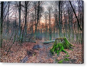 Logging Track Canvas Print