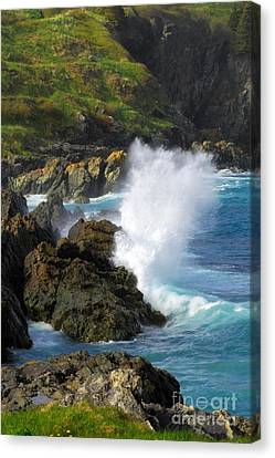 Logy Bay In Newfoundland Canvas Print by Charline Xia